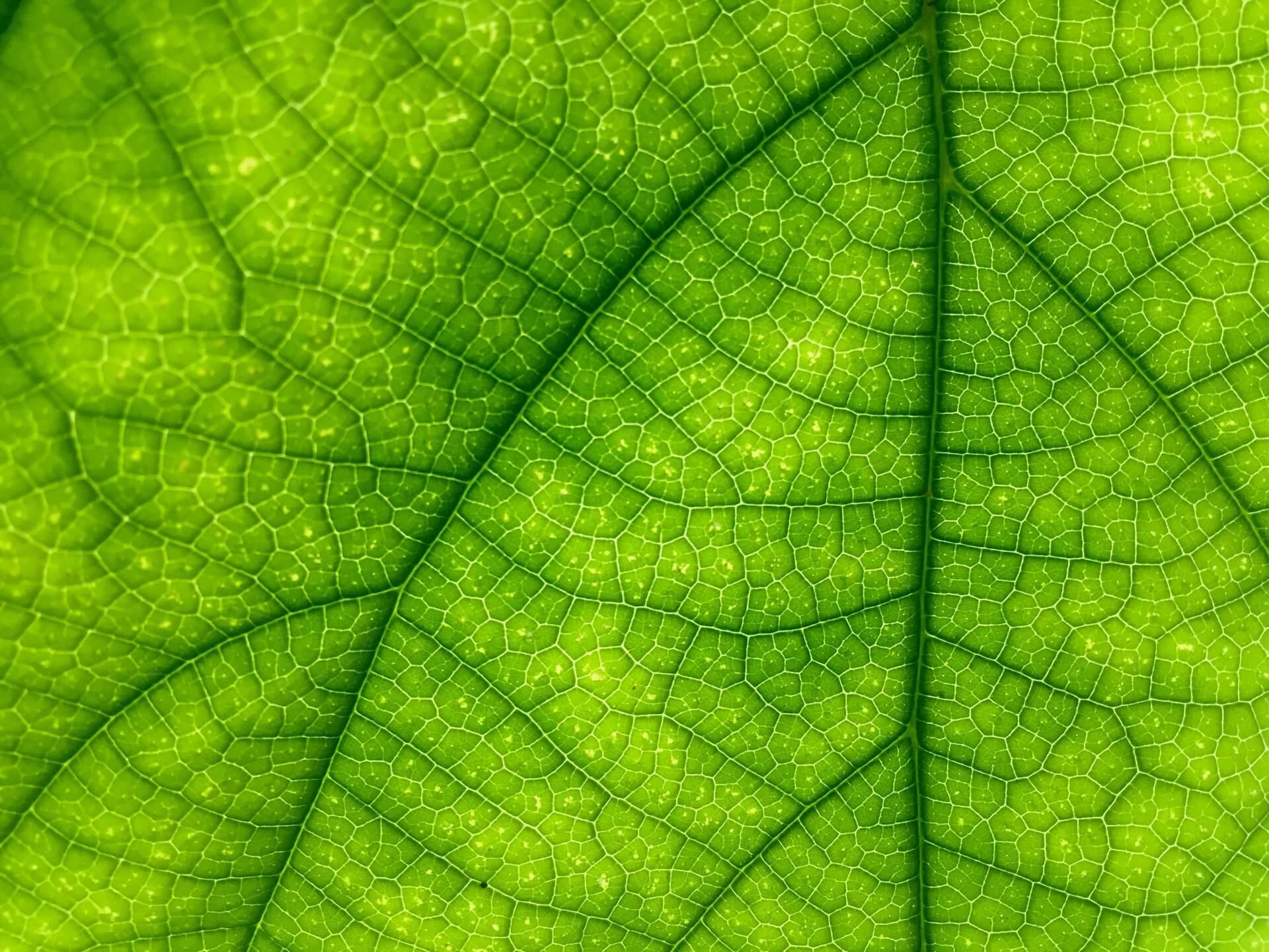 macro-leaf[1]
