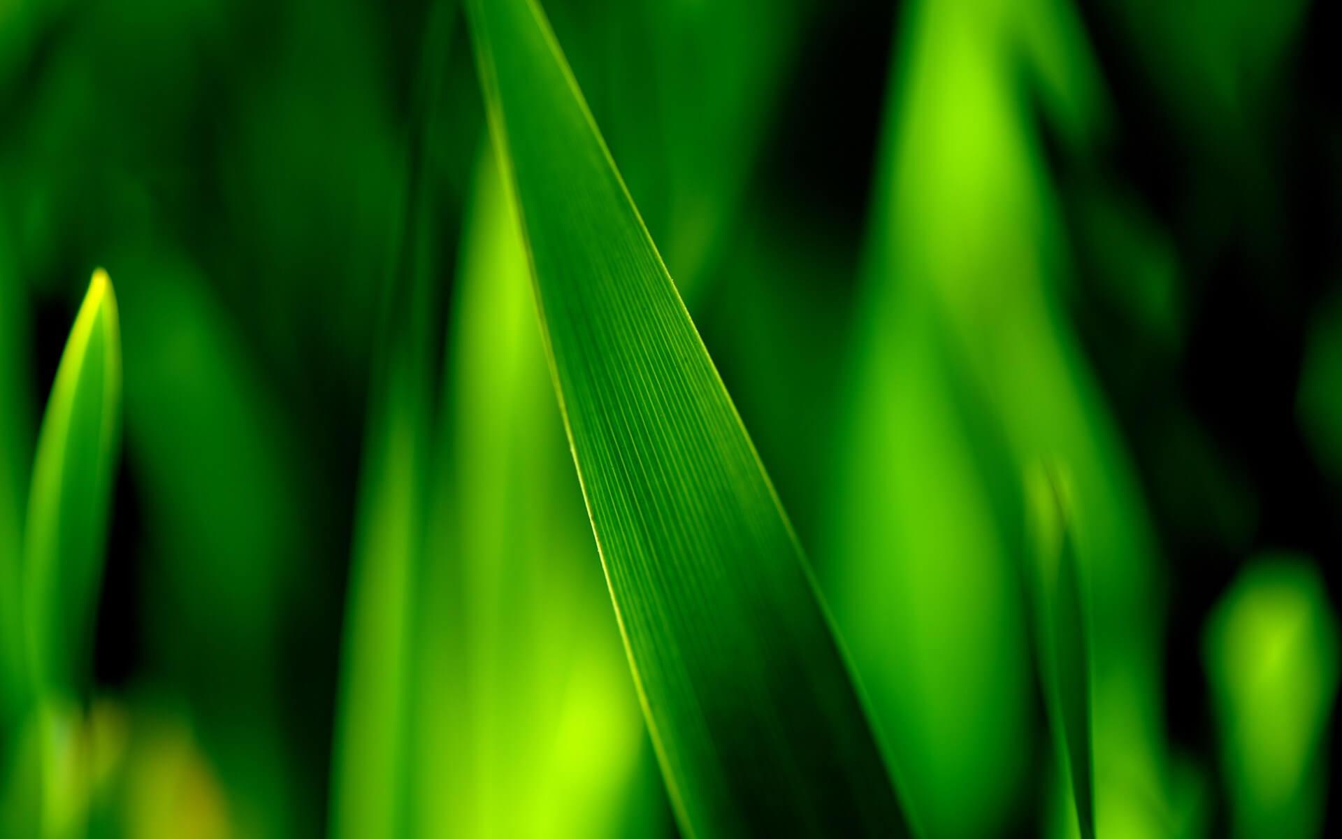 green-macro-1